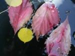 autumn 009