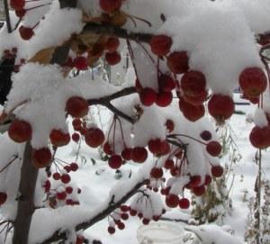 first snow 001