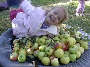 fruit 012