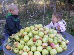 fruit 019